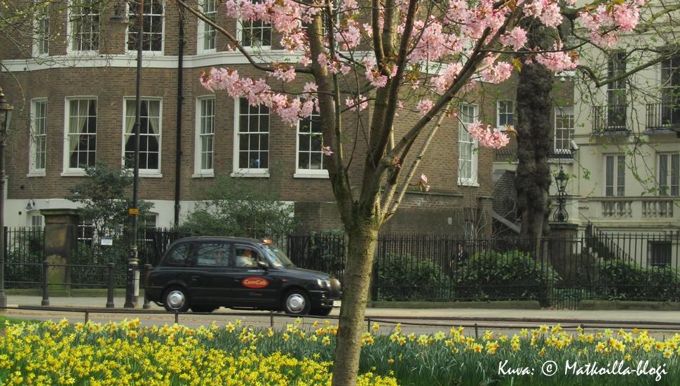 Kuukauden kuva: Lontoo, St. James's Park, maaliskuussa 2011. Kuva: © Matkoilla-blogi