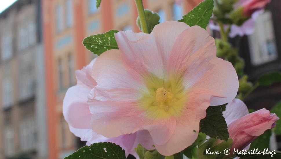 Krakova - yllättävän vihreä ja kukkiva kaupunki. Kuva: © Matkoilla-blogi