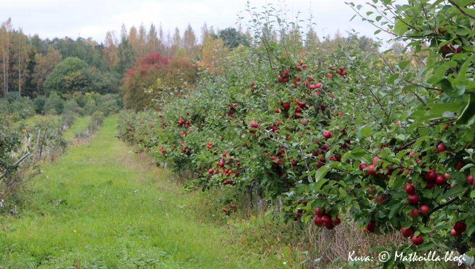 Ciderberg, Lohjansaari. Kuva: © Matkoilla-blogi