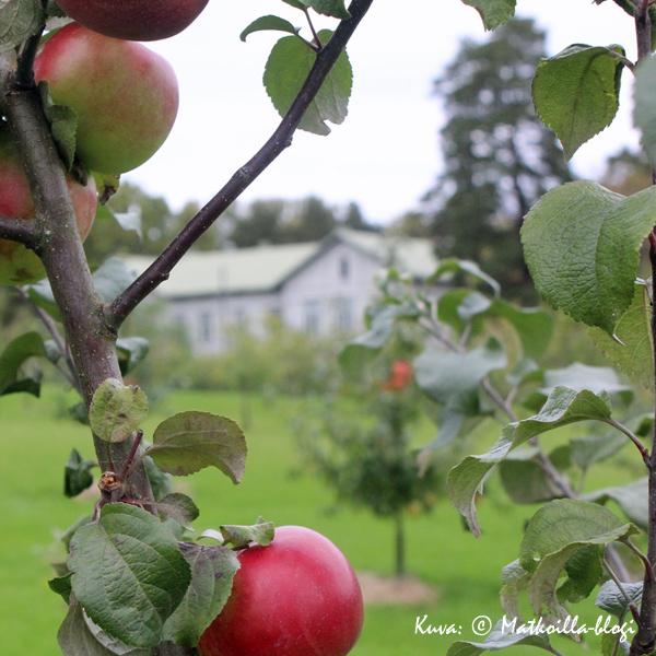 Fructicetum, Lohjansaari. Kuva: © Matkoilla-blogi