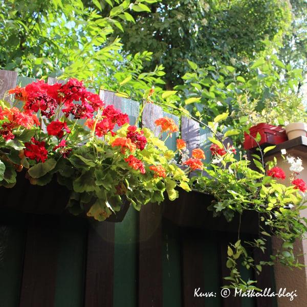 Krakova_baari_Ulica-Krokodyli_puutarha_Kuva_©_Matkoilla-blogi