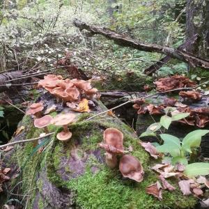 Metsn on tullut jo syys ruska syksy visitlohja karkalinluonnonpuisto