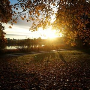 Sunshine came before rain Ajat ab amazing and sunny autumnmorninghellip