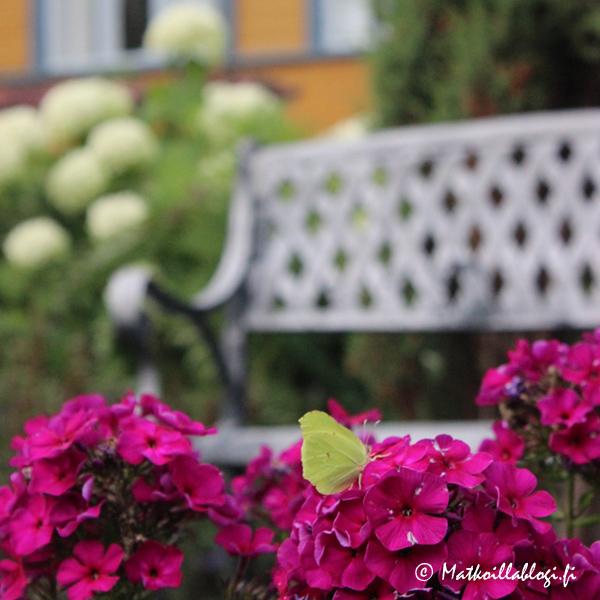 Villa Aaltosen puutarhassa