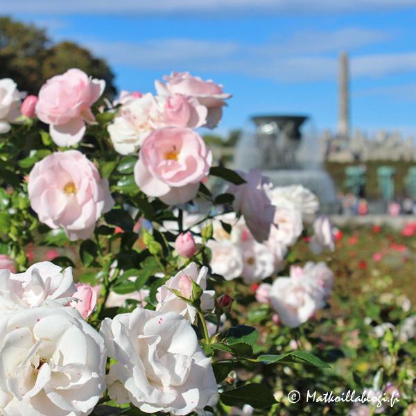 Oslo, Vigelandsanlegget: Ruusut