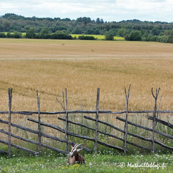 Anglan tuulimyllykylä, peltomaisema