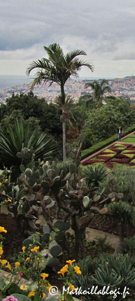 Kuukauden kuva, maaliskuu 2021: Funchal, Kasvitieteellinen puutarha. Kuva: © Matkoillablogi.fi