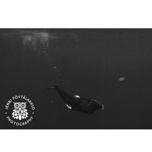 Spring 2017 Magical ocean australia ocean blackandwhite snorkling