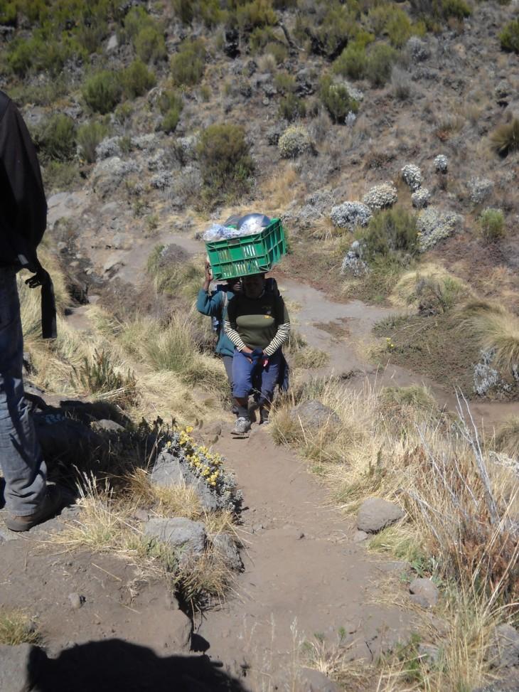 Naiskantaja. Muistin väärin, etteikö heitäkin olisi ollut Kilimanjaron rinteillä.