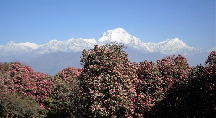 Himalajan lumihuippuja Nepalissa