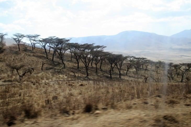 Matkalla Ngorongoroon