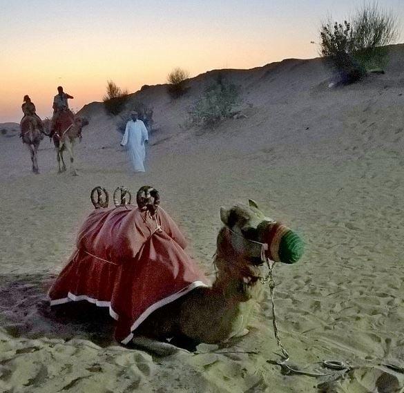 Dubai_kameliratsastusta aavikolla