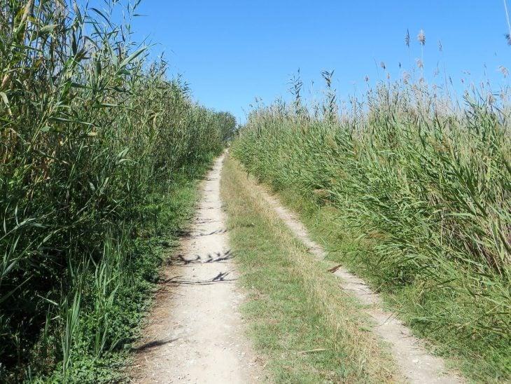 vaelluspolku pellon reunassa mallorcalla
