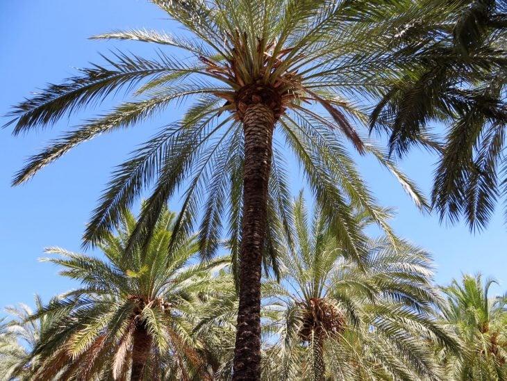 palmtrees_mallorca
