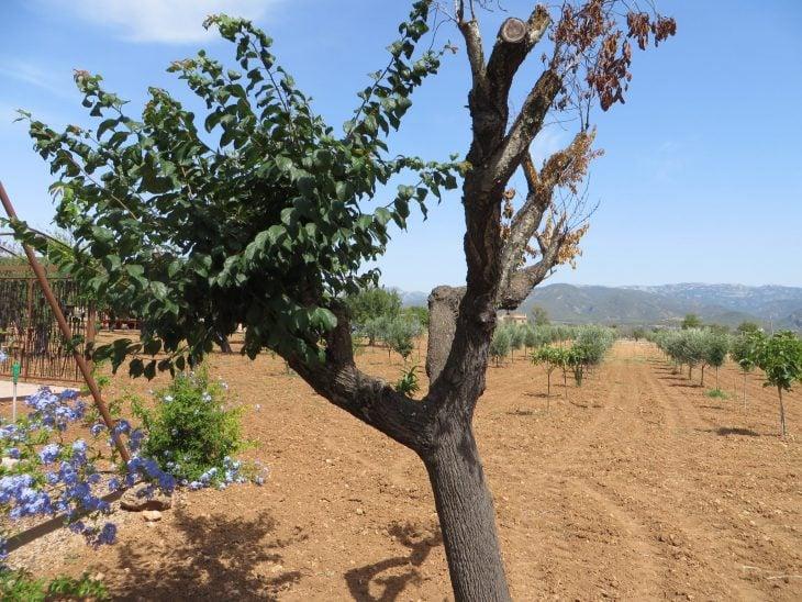 viinitilan köynnösmaisemaa