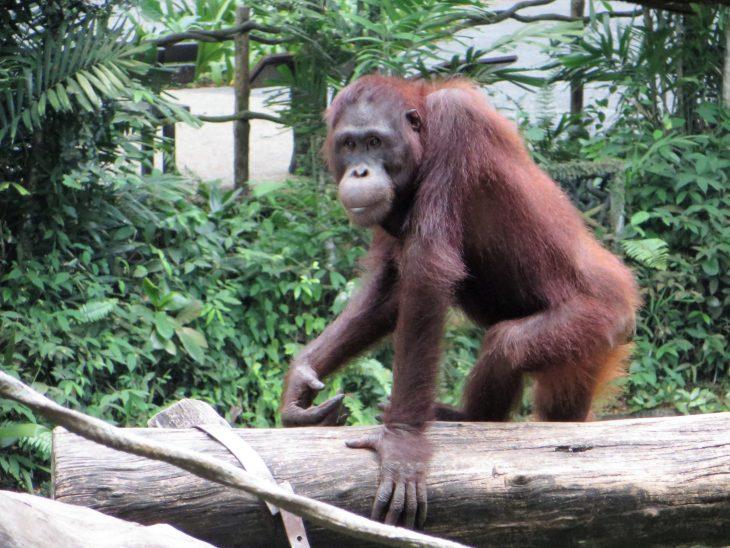 oranki_singapore_zoo