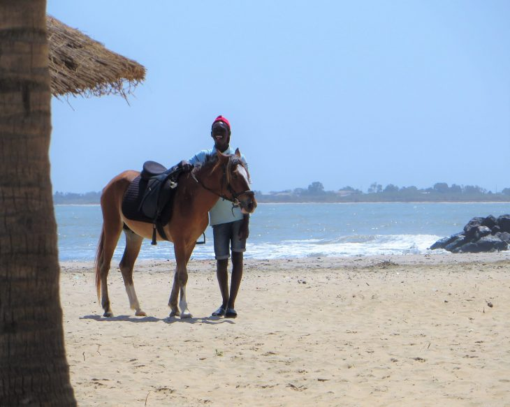 gambia_horse