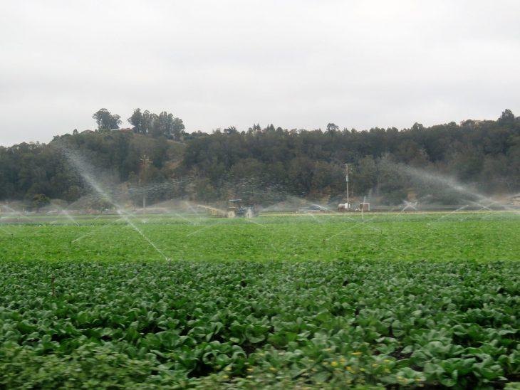 kalifornia_maatalous