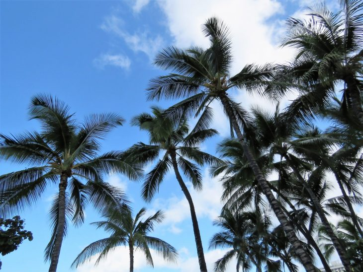 havaiji_palmut