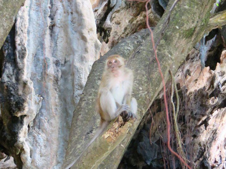 monkey_phranang