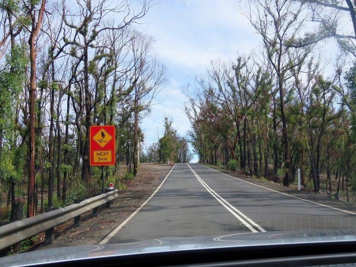 australia-after-bushfires