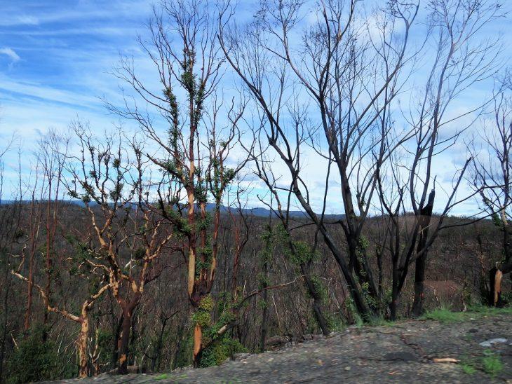 australia-forest