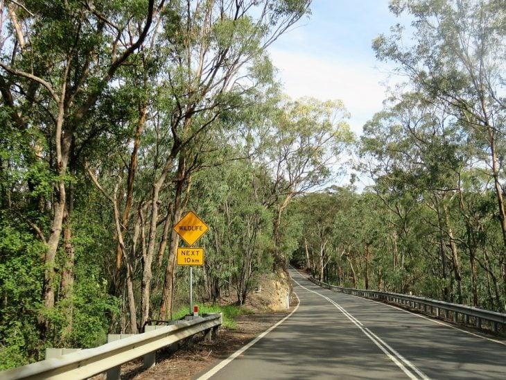 australia-wildlife-next10km