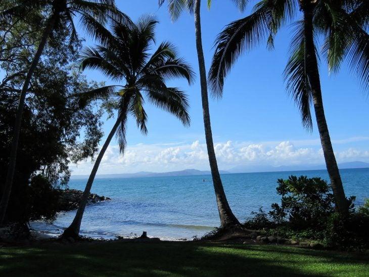 flagstaff-hill-trail-palmtrees