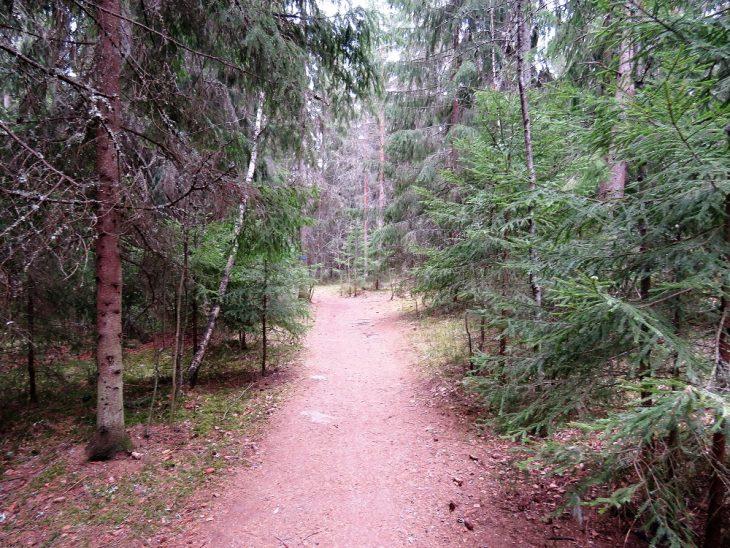 jarvien-kierros-metsapolku