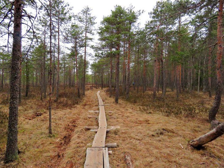 soisalmensuo-pitkospuut