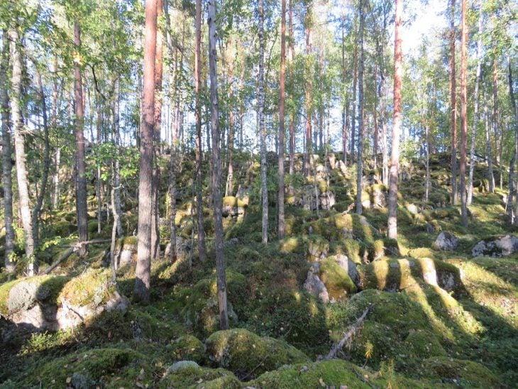 kangasniemi-aurinkoinen-sammalmetsa