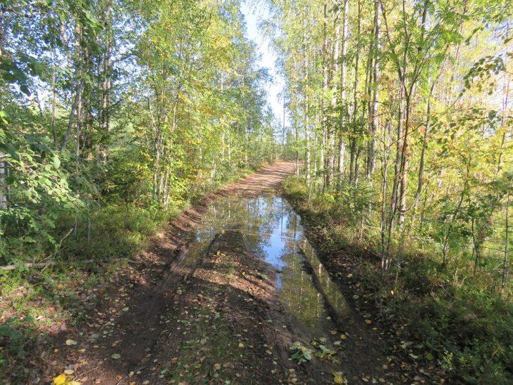 kangasniemi-metsatie-jossa-vesilammikko