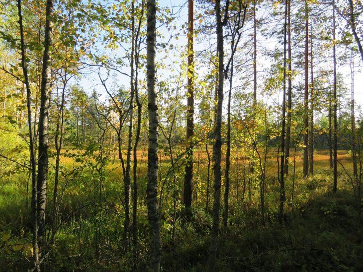 kangasniemi-suomaisema