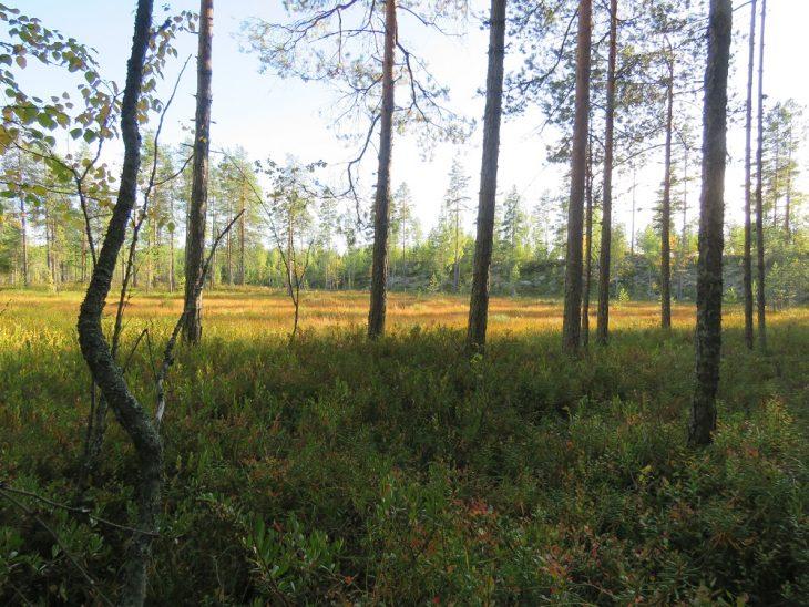 kangasniemi-syksyinen-suomaisema