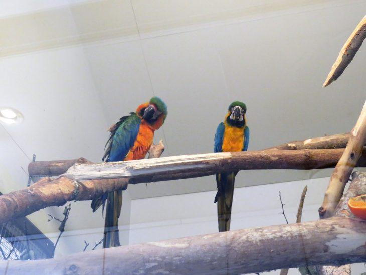 heinolan-lintuhoitola-papukaijat