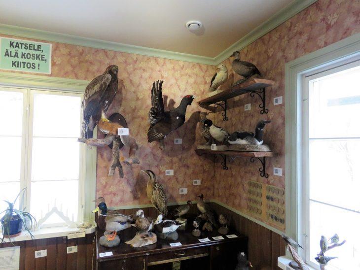 heinolan-lintuhoitola-taytetyt-linnut