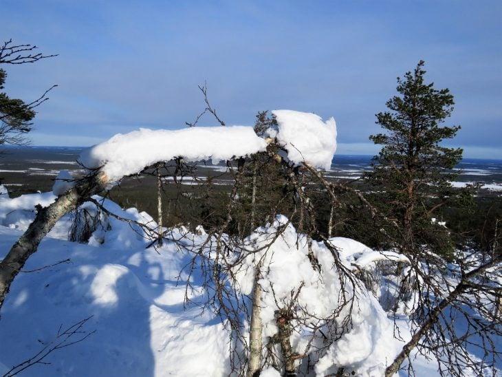 puiden-oksilla-lunta-katkatunturilla