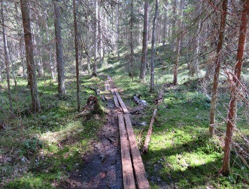 pesakallio-pitkospuut
