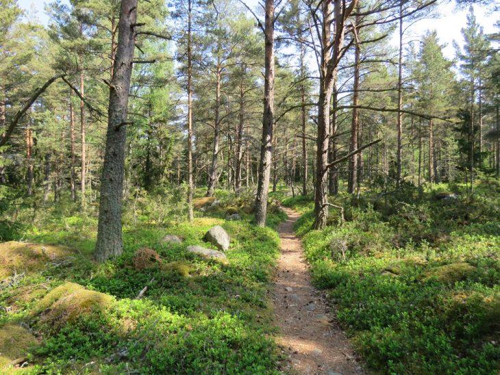 oro-luontopolku-metsassa