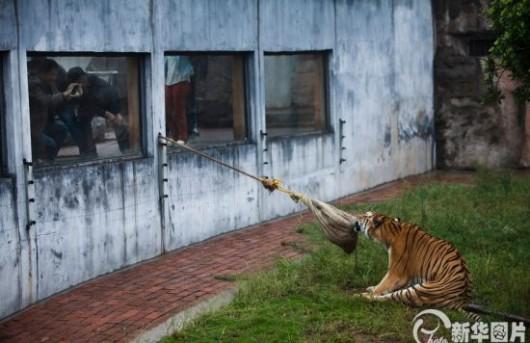 kiina eläintarha