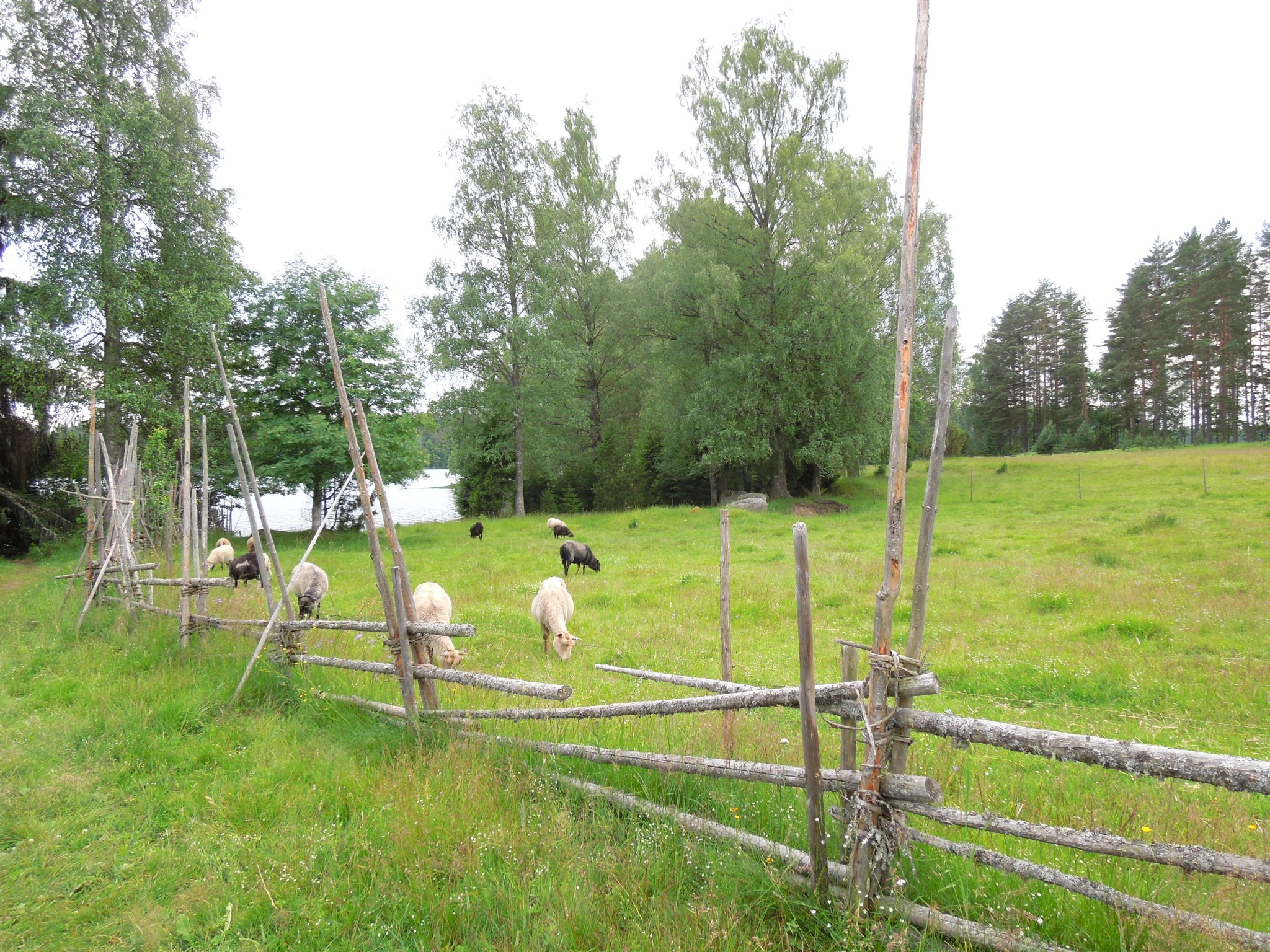 Liesjärven kansallispuisto korteniemen perinnetila