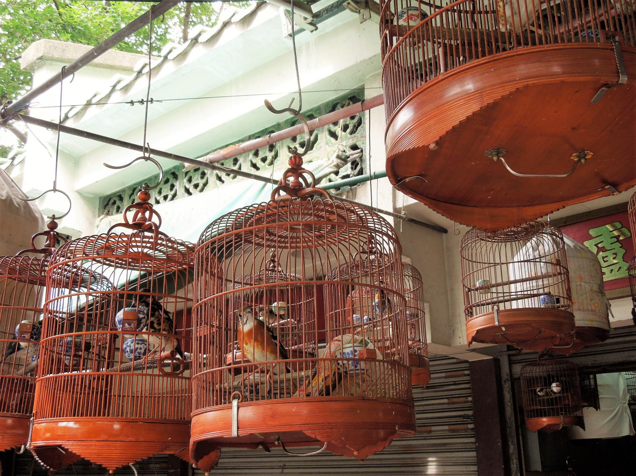 hongkong markkinat lintumarkkinat nähtävyydet