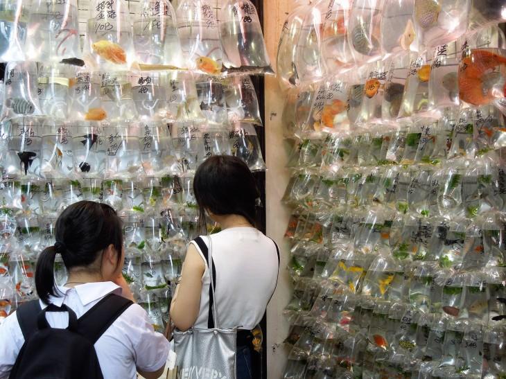 gold fish market hong kong