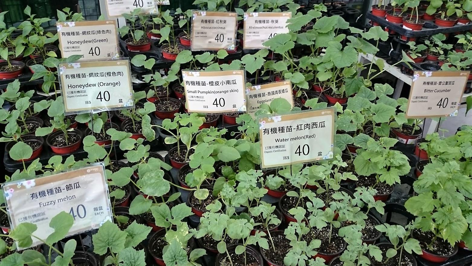 kukkamarkkinat hongkong markkinat nähtävyydet