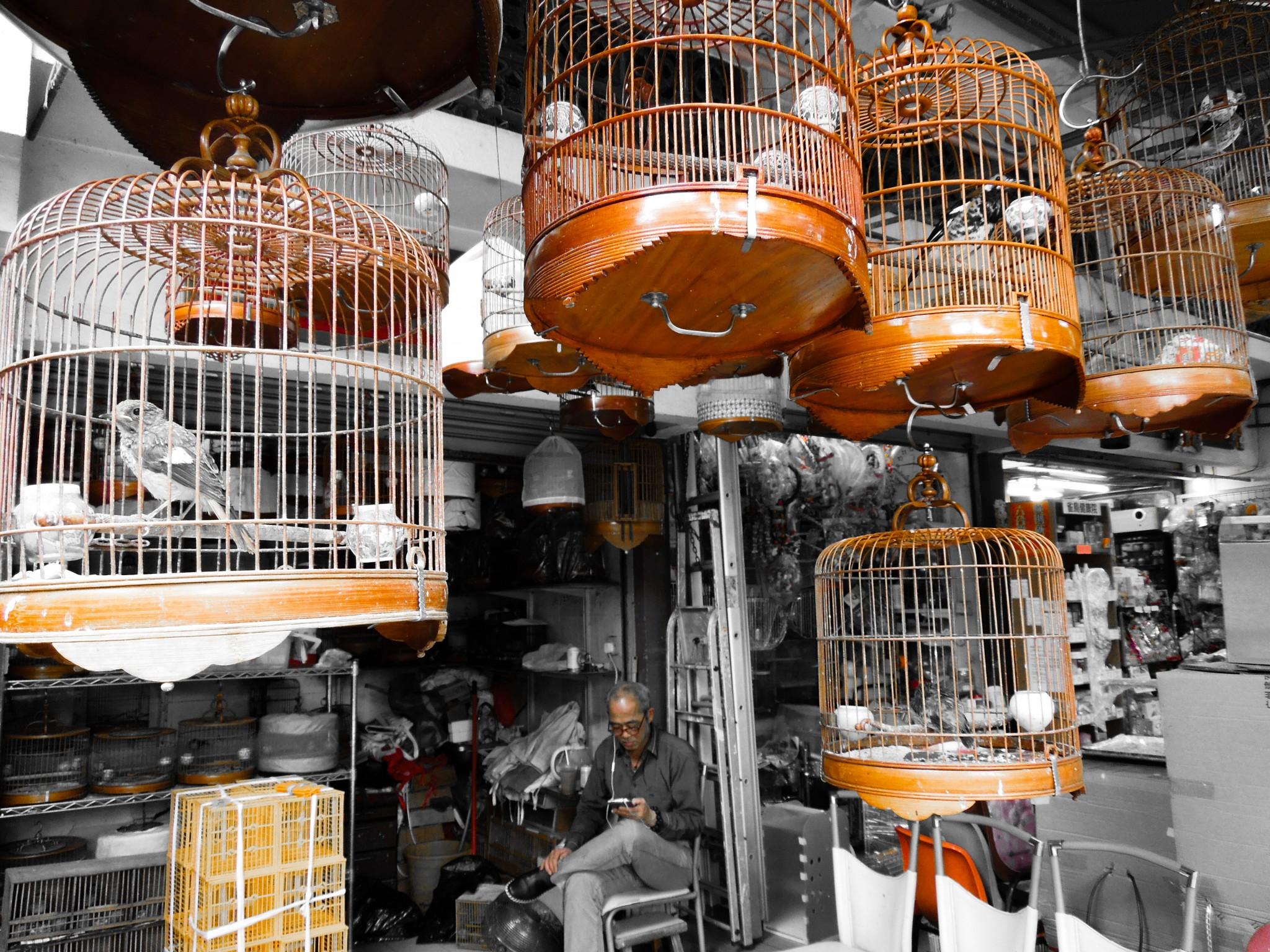 Bird market hongkong markkinat