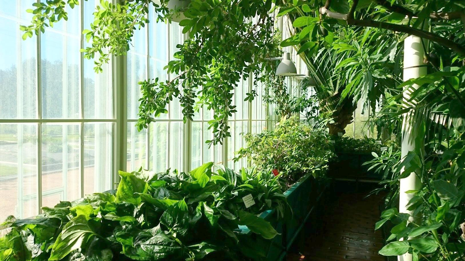 Kaisaniemen kasvitieteellinen puutarha kasvihuone