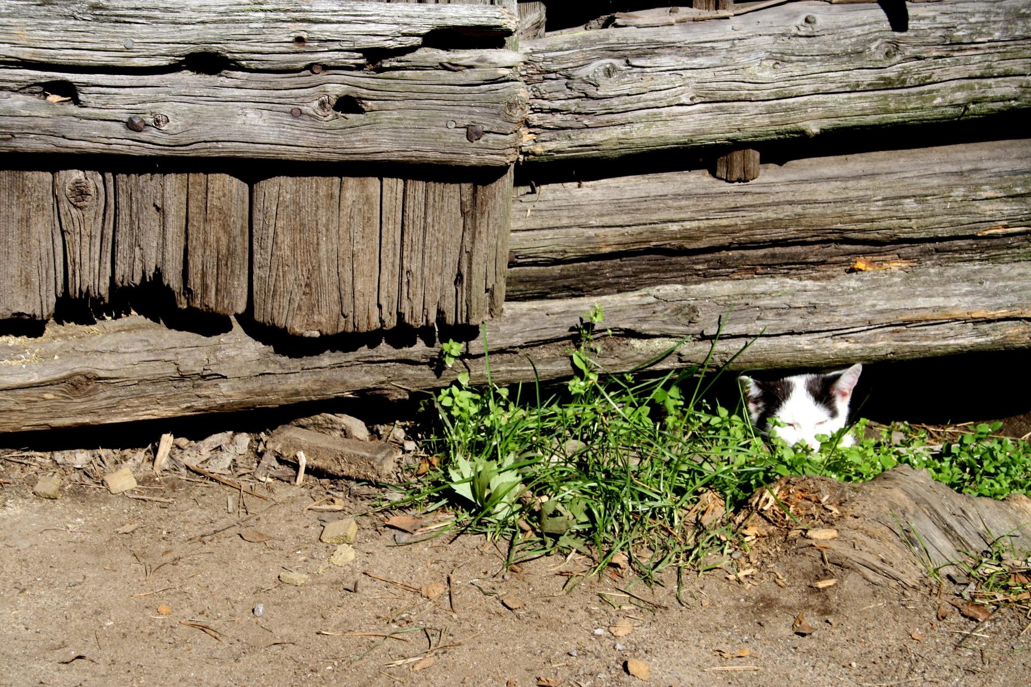 Toivosen talonpojanmuseo eläinpuisto Kokkola tekemistä