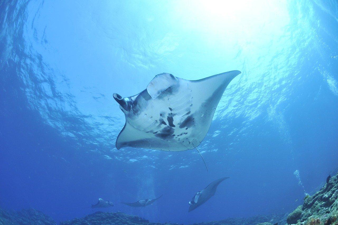 Nusa Penida sukellus snorklaus