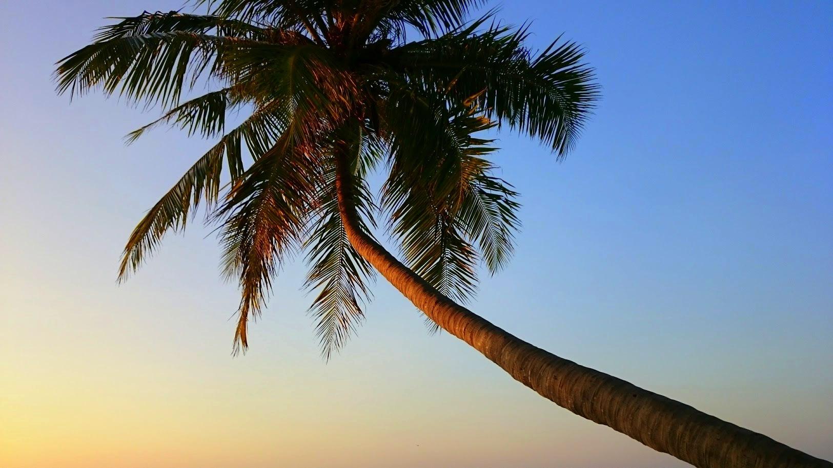 Maafushi raha valuutta edullisesti malediiveille kokemuksia