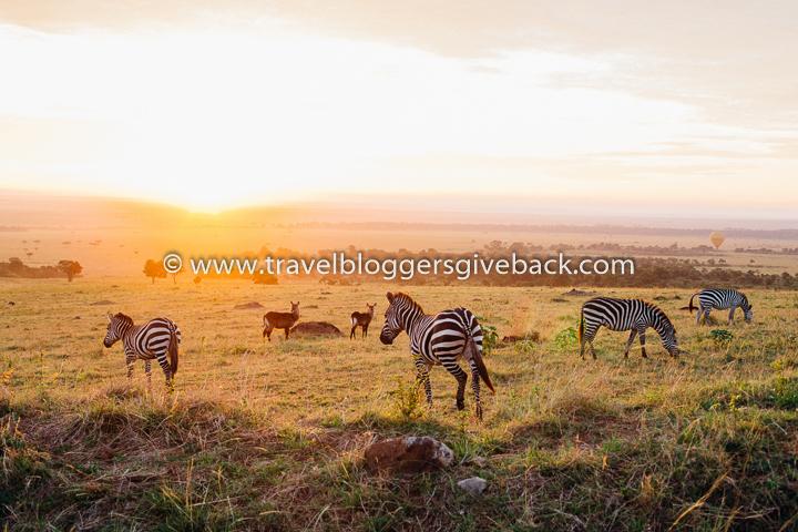 02_kenia-safari-seeprat-inka-khanji